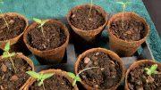 Seeds-Soil-Sun-How-to-Grow-Cannabis-Ep-1-Germinating-Seeds-Thumbnai-1l